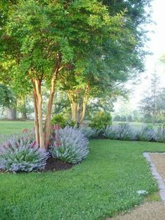 38 Best Trees Images Plants Garden Trees Trees To Plant