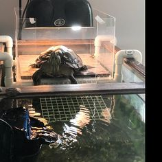 Turtle Tank Ideas Discover Your place to buy and sell all things handmade Medium Turtle Tower Turtle Basking Platform Turtle Dock Saltwater Aquarium, Aquarium Fish Tank, Freshwater Aquarium, Turtle Tank Accessories, Aquarium Accessories, Turtle Basking Platform, Turtle Dock, Aquarium Design, Aquarium Ideas