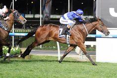 Sovereign Nation (AUS) 2012 B.c. (Enosta de Lago (AUS)-Sovereign Duchess (AUS) by Last Tycoon (IRE) 1st MVRC Bill Stutt S (AUS-G2,1600mT,Moonee Valley) (photo: Racing and Sports)
