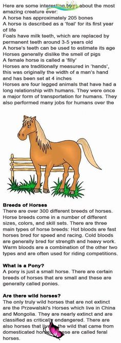 Horse fun facts for kids<br>
