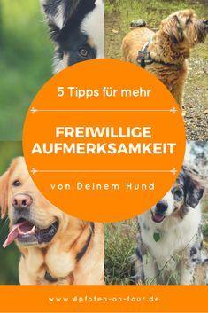 Freiwillige Aufmerksamkeit, welcher Hundehalter träumt nicht davon? Aber was macht Dein Hund stattdessen draußen: Hundedinge, die ihn einfach glücklich machen und seinen Erkundungsdurst stillen. Dein Hund geht schnüffeln, Spuren erkunden, andere Tiere oder Menschen beobachten, checkt eventuelle Gefahren ab, beschäftigt sich mit seiner Umwelt, geht einfach mal flitzen und hat Spaß daran. Sei froh – das muss so sein! Wäre dem nicht so, solltest Du Dir Gedanken machen, warum…