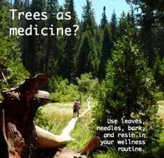 10 Herbal Remedies and Recipes Resources - Heal Thyself!