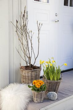 Pynt inngangspartiet med magnolia, narciss og primula. Magnolia, Easter Decor, Plants, Outdoor, Inspiration, Creative, Deco, Outdoors, Biblical Inspiration