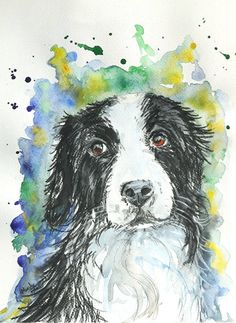 .I have two Border collies at home.They are just amazingly intelligent dogs you can find.I love their eyes ,it seems like they always feel guilty about something but in real its just pure loyalty.This chap called Sky is just imaginary Border collie dog who`s desperately looking for loving home :) Painted with White Nightwatercolour paints and added strokes with Inktense watercolour pencils.The painting is on 200gsm watercolor paper. It comes without mount and measures 8,5 x 11,5 inch  It…