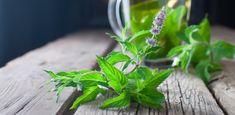 Peppermint Tea, Weight Loss Drinks, Detox Tea, Tea Time, Ale, Tasty, Herbs, Leaves, Amazon