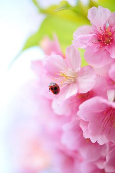 Spring Adventure by *Sakura* Orange Blossom, Cherry Blossom, Love Flowers, Beautiful Flowers, Especie Animal, Beginning Of Spring, Bloom Where You Are Planted, Welcome Spring, Spring Nature