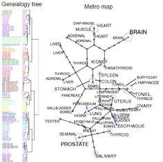 international journal of biology education pdf