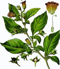 the history and benefits of the use of hallucinogenic plants Throughout history these plants have been originating from northern asia, cannabis enjoys many hundreds of studies, and shows numerous benefits fro known among people of south america as the tree of the evil eagle, is a potent medicinal and psychoactive plant that has played a.