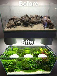 Natural fish tank