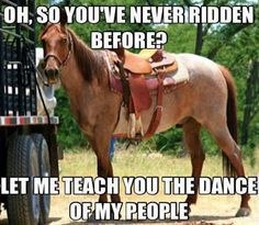 So you've never ridden before… I know a few horses like this...