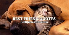 Collection of the best Best Friend quotes by famous authors, inspiring leaders, and interesting fictional characters on Best Quotes Ever.