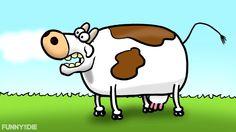Cow go Moo?