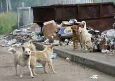 O GRITO DO BICHO 3: Abrigo para animais comunitários é autorizado no D... Newborn Puppies, Animal Action, Dog Pounds, Animal Control, Stray Dog, Husky, Labrador Retriever, Dogs, Animals
