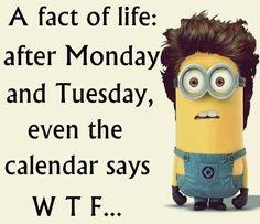 HAPPY MINION MONDAY EVERYBODY!!!!!!!!!!!!