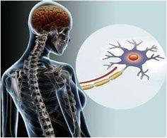 Study: in Autoimmunity A Specific Immune Receptor may Activate B Cells (Medindia: Dec 22, 2013) #lupus