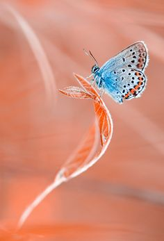 Butterfly - by Magda Wasiczek