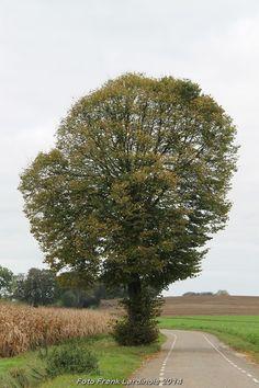 2014-10-26 Merkelbeek