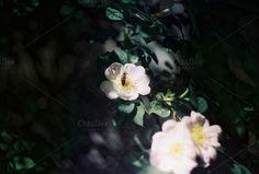 A flower and a bee by Kasia Górska on @creativemarket