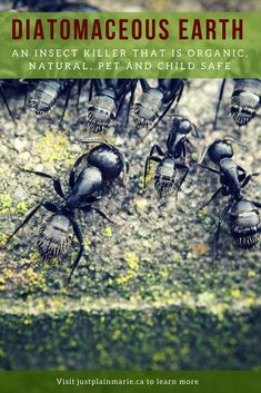 Cat Safe Ant Killer Uk