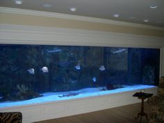 Saltwater fish tank. can mine be this fab?!