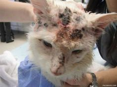 Petition | Justice for Joe, Ontario cat shot 17 times! Please SIGN & SHARE!  http://www.yousign.org/en/justice-for-joe