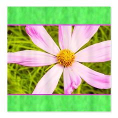 Baby Pink Cosmos Flower Shower Curtain #cafepress #cosmos #showercurtain #flower #homedecor #bathroomdecor $43.59 This Weekend ONLY Summer Lovin' Sale Extra 20% Off use code: SUM20