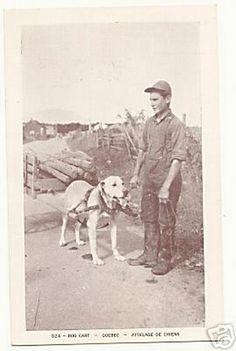 Carrello Dog.  Quebec intorno al 1940.