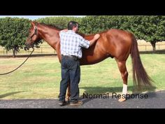 Dr. Mark DePaolo, DVM did this video on how you can detect neurological problems in your horse. The goal of this video is to give you the knowledge of when it would be appropriate to call your veterinarian and ask...