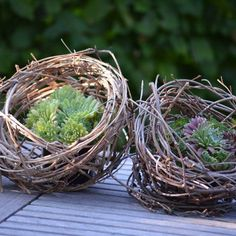 Decorative balls made of clematis tendrils - natural decoration spring - . Decorative balls made of clematis tendrils - natural decoration spring - .