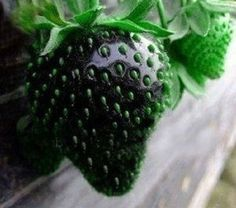 50 Rare Black Strawberry Seeds Pineberry Seed - Gorgeous Heirloom seeds! Gonna give them a go :)
