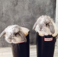 Buns in boots!