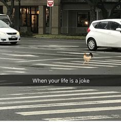 When your life is a joke