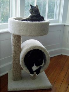Comfortable Bed and Toys for Your Cat