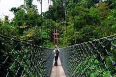 Image result for Ulu Ulu National Park