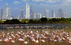 Visit the Ras Al Khor Wildlife Sanctuary to get up close and personal with some stunning flamingos.