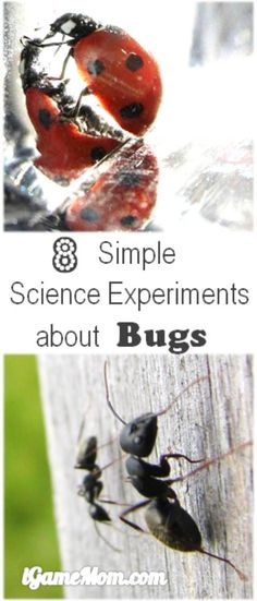 Simple science experiments with bugs for kids from preschool to school age. Even if you don't like bugs, you will find activities you can enjoy, plus kids will learn scientific facts about insects and gain research skills. Do you know ants move faster at