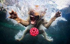 http://aricrenio.blogspot.com.br/p/animais_16.html