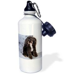 3dRose Black and white Toy Poodle, Sports Water Bottle, 21oz
