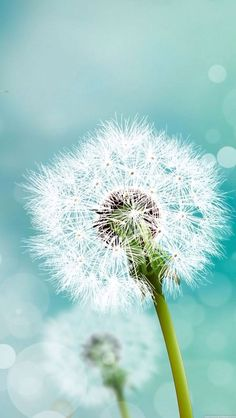 """Search Results for """"galaxy note 3 lock screen wallpaper hd"""" – Adorable Wallpapers Dandelion Wallpaper, Flower Wallpaper, Wallpaper Backgrounds, Wallpaper Ideas, Mobile Wallpaper, Blowing Dandelion, Dandelion Wish, Dandelion Flower, Samsung Lock Screen Wallpaper"""