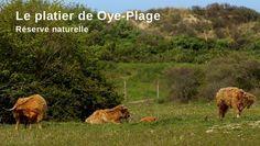 Côte d'Opale - Le platier de Oye Plage, réserve naturelle