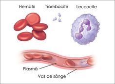 What Is Plasma? Plasma is the often forgotten part of blood. White blood cells, red blood cells, and platelets are important to body function. But plasma also plays a key role. This fluid carries the blood components throughout the body. White Blood Cell Count, White Blood Cells, Circulatory System, Lymphatic System, Endocrine System, Parts Of Blood, Blood Components, What Is Red, Human Body