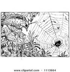black and white drawing of types of spider webs - Yahoo Search Results ...