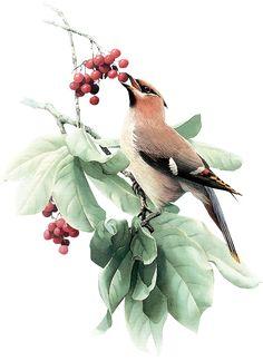 View album on Yandex. Wildlife Paintings, Wildlife Art, Animal Paintings, Watercolor Bird, Watercolor Paintings, Original Paintings, Bird Drawings, Animal Drawings, Natural Form Art
