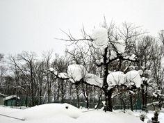 Hanging snow . Hokkaido