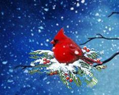"""""""Winter Cardinal"""""""