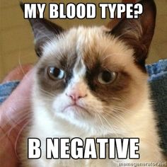 Grumpy Cat  - My blood type? b negative