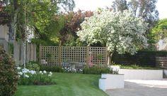 Crab apple blossom with white Tulip 'Mount Tacoma'. Garden design from Goose Green Design, Scotland