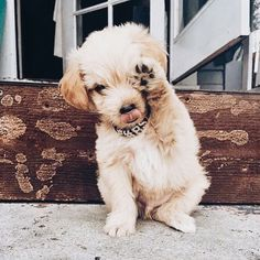 Pup ★❤★ Trending • Fashion • DIY • Food • Decor • Lifestyle • Beauty • Pinspiration ✨ @Concierge101.com