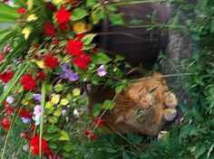 Rusty by the flowers!!