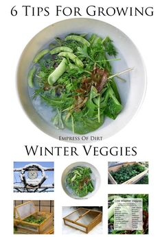 6 Tips For Growing Winter Veggies (in the snow!) #eBay